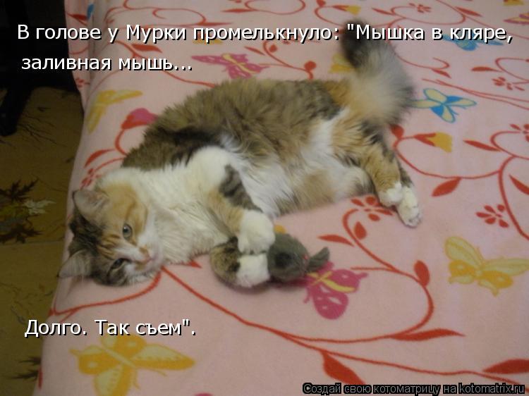 """Котоматрица: В голове у Мурки промелькнуло: """"Мышка в кляре, заливная мышь.. долго. Так съем"""". В голове у Мурки промелькнуло: """"Мышка в кляре,  заливная мышь..."""