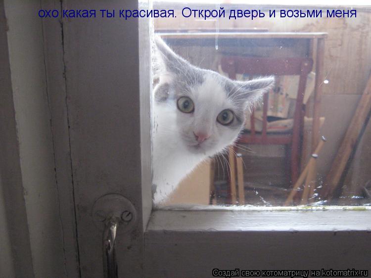 Котоматрица: охо какая ты красивая. Открой дверь и возьми меня