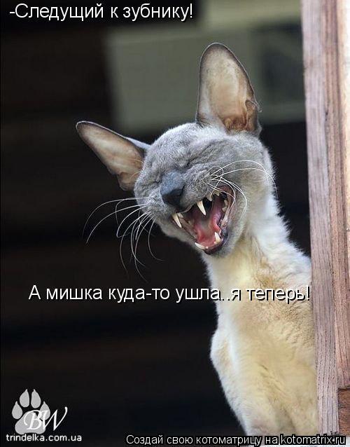 Котоматрица: -Следущий к зубнику! А мишка куда-то ушла..я теперь!