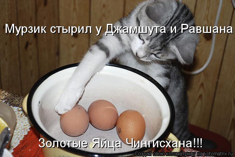 Котоматрица: Мурзик стырил у Джамшута и Равшана Золотые Яйца Чингисхана!!!