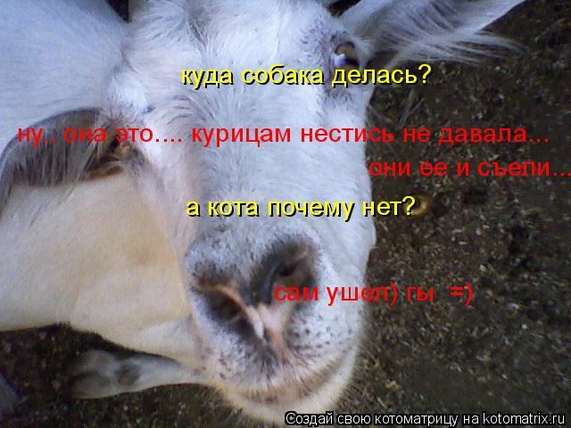 Котоматрица: куда собака делась? ну.. она это.... курицам нестись не давала...  они ее и съели...  а кота почему нет? сам ушел) гы  =)