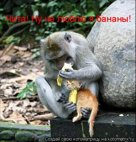 Котоматрица: Чита! Ну не люблю я бананы!