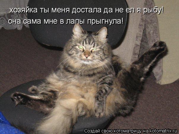Котоматрица: хозяйка ты меня достала да не ел я рыбу! она сама мне в лапы прыгнула!