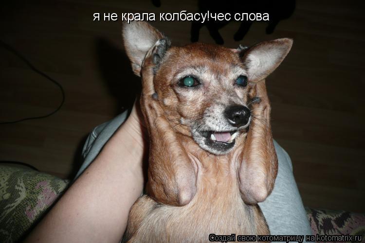 Котоматрица: я не крала колбасу!чес слова
