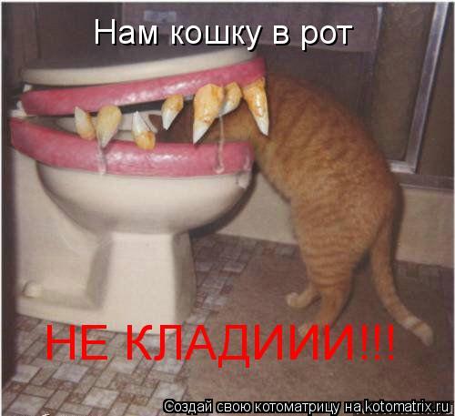 Котоматрица: Нам кошку в рот НЕ КЛАДИИИ!!!