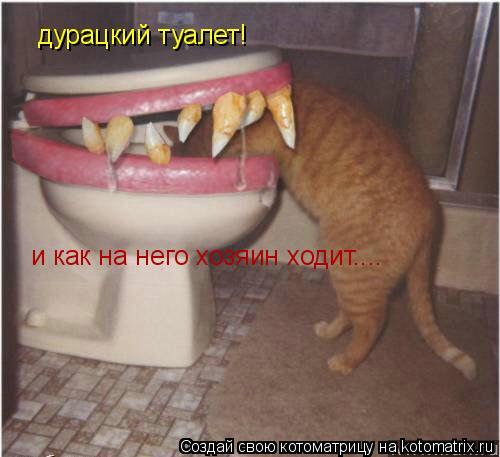 Котоматрица: дурацкий туалет! и как на него хозяин ходит....