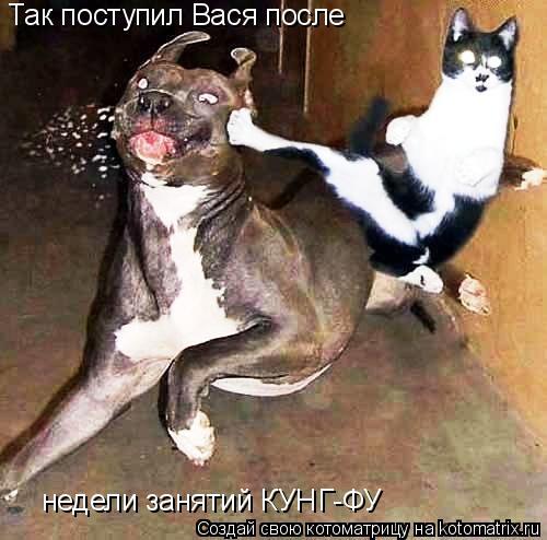 Котоматрица: Так поступил Вася после  недели занятий КУНГ-ФУ
