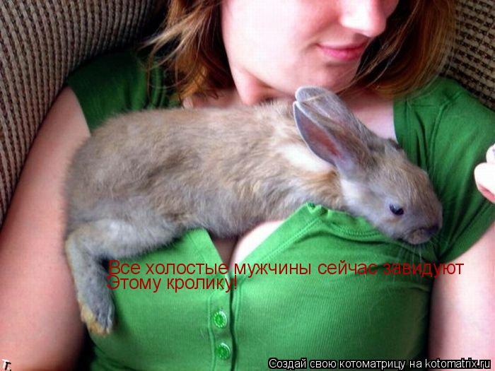 Котоматрица: Все холостые мужчины сейчас завидуют  Этому кролику!