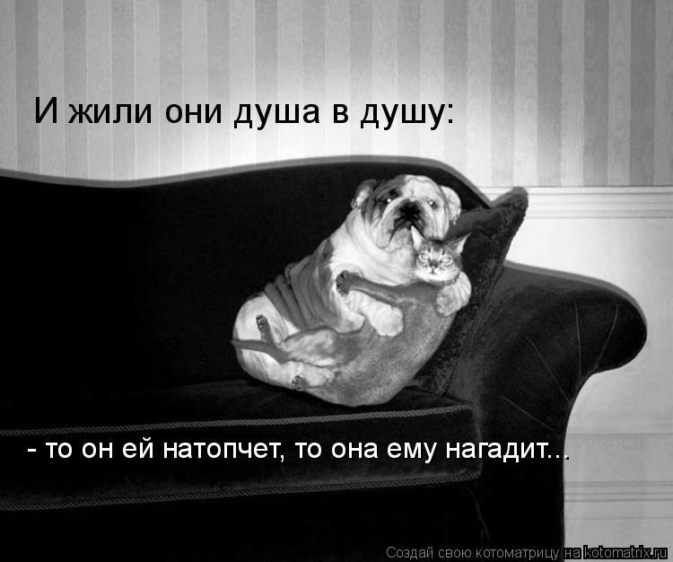 Котоматрица: И жили они душа в душу:  - то он ей натопчет, то она ему нагадит...