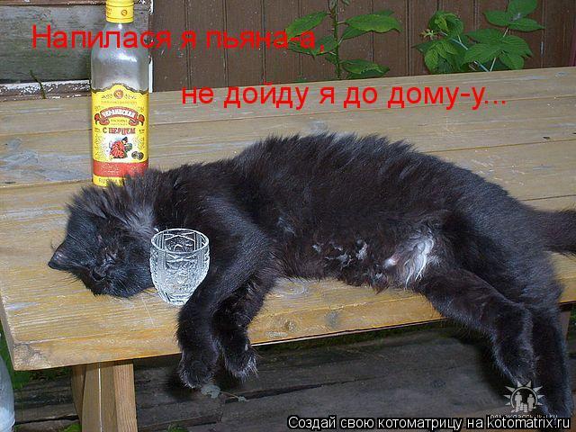 Котоматрица: Напилася я пьяна-а, не дойду я до дому-у...