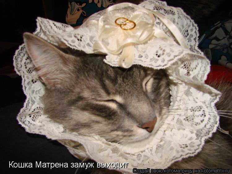 Котоматрица: Кошка Матрена замуж выходит