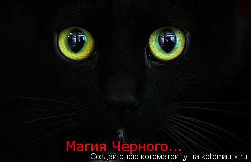 Котоматрица: Магия Черного...