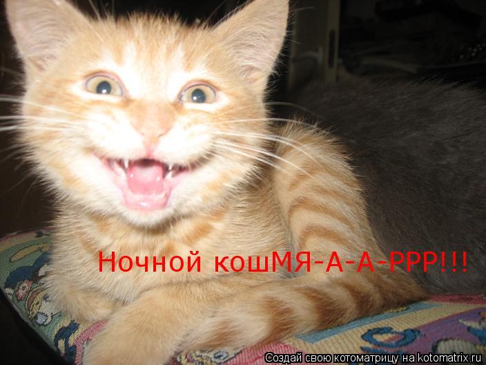 Котоматрица: Ночной кошМЯ-А-А-РРР!!!