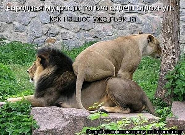 Котоматрица: народная мудрость только сядеш отдохнуть как на шеё уже львица