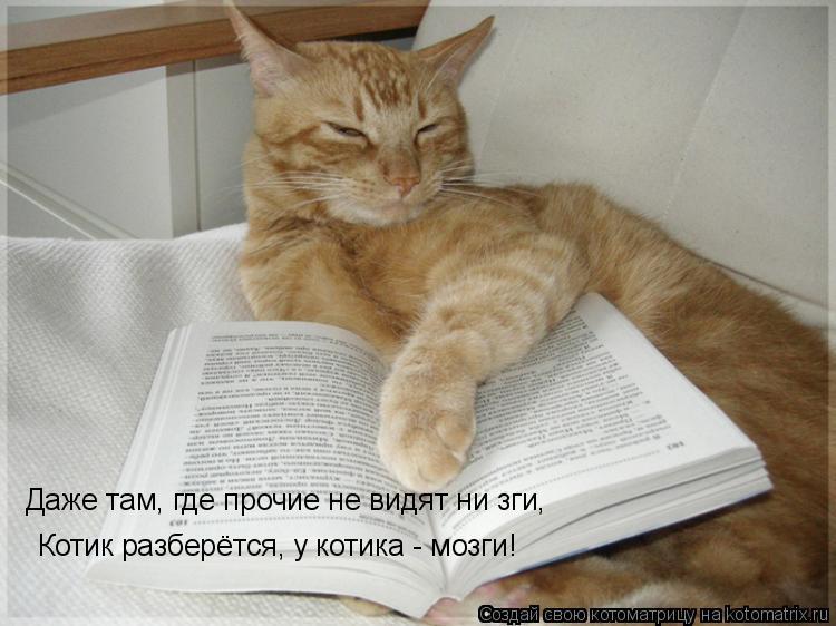 Котоматрица: Даже там, где прочие не видят ни зги,  Котик разберётся, у котика - мозги!