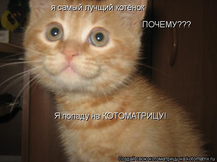 Котоматрица: я самый лучщий котёнок ПОЧЕМУ??? Я попаду на КОТОМАТРИЦУ!
