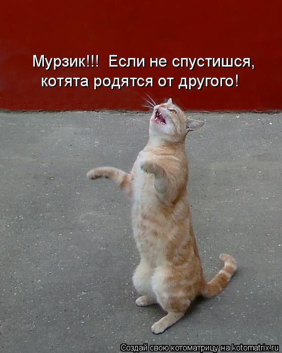 Котоматрица: Мурзик!!!  Если не спустишся, котята родятся от другого!