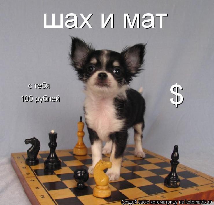 Котоматрица: шах и мат с тебя 100 рублей с тебя $