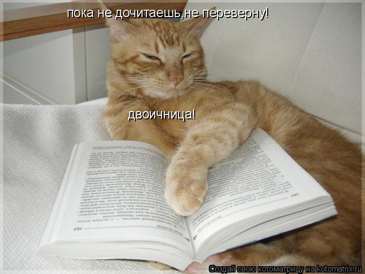 Котоматрица: пока не дочитаешь,не переверну! двоичница!