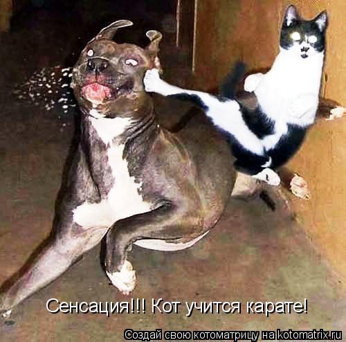 Котоматрица: Сенсация!!! Кот учится карате!