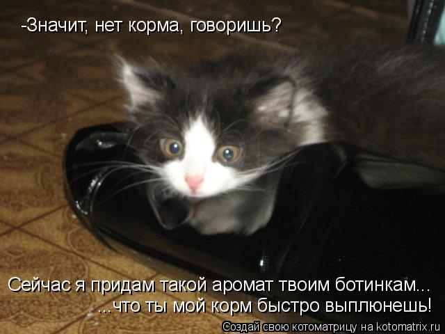 Котоматрица: -Значит, нет корма, говоришь?  Сейчас я придам такой аромат твоим ботинкам... ...что ты мой корм быстро выплюнешь!