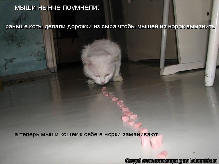 Котоматрица: мыши нынче поумнели: раньше коты делали дорожки из сыра чтобы мышей из норок выманить а теперь мыши кошек к себе в норки заманивают