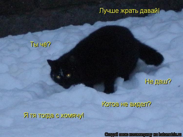 Котоматрица: Ты чё? Котов не видел? Лучше жрать давай! Не даш? Я тя тогда с хомячу!