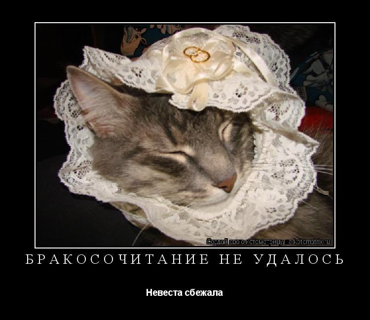 Котоматрица: Бракосочитание не удалось Невеста сбежала