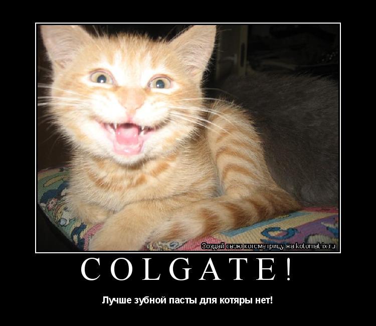 Котоматрица: Colgate! Лучше зубной пасты для котяры нет!