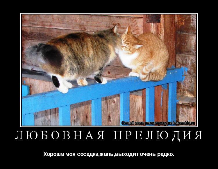 Котоматрица: любовная прелюдия Хороша моя соседка,жаль,выходит очень редко.