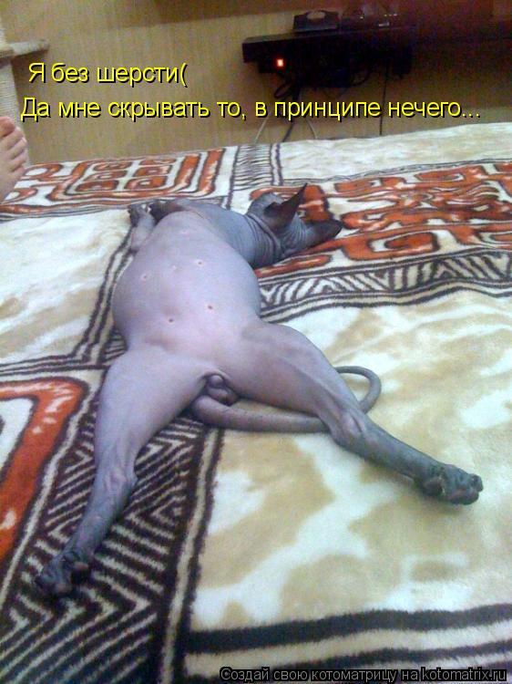 Котоматрица: Я без шерсти( Да мне скрывать то, в принципе нечего...