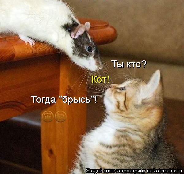 "Котоматрица: Ты кто? Кот! Тогда ""брысь""!"