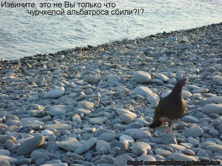 Котоматрица: Извините, это не Вы только что чурчхелой альбатроса сбили?!?