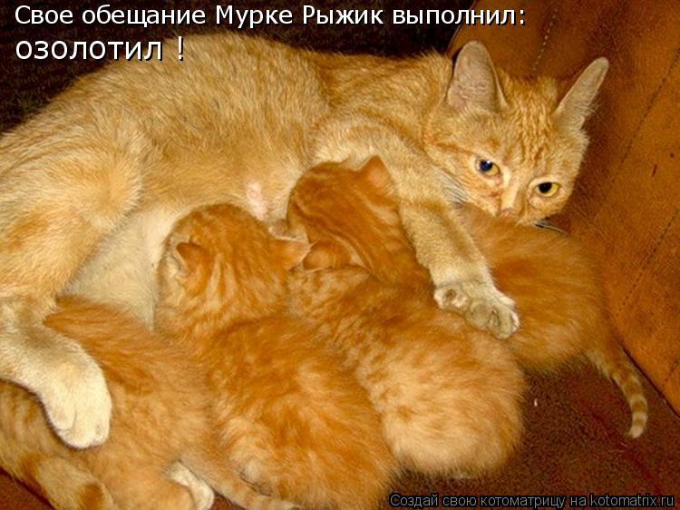 Котоматрица: Свое обещание Мурке Рыжик выполнил: озолотил !