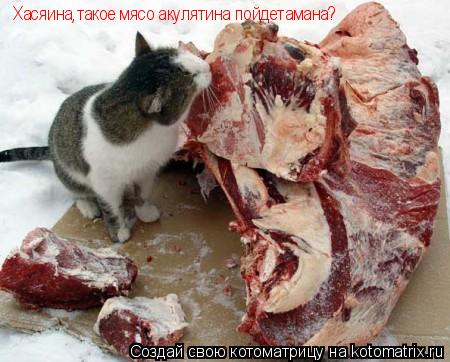 Котоматрица: Хасяина,такое мясо акулятина пойдетамана?