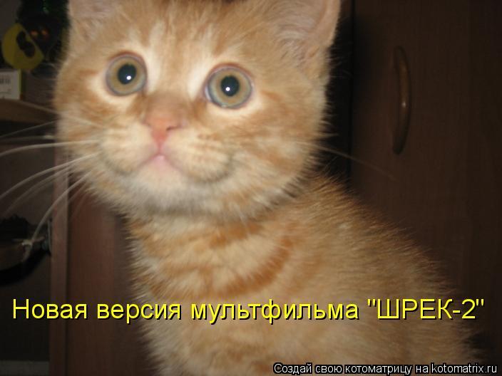 """Котоматрица: Новая версия мультфильма """"ШРЕК-2"""""""
