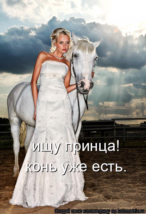 Котоматрица: ищу принца! конь уже есть.