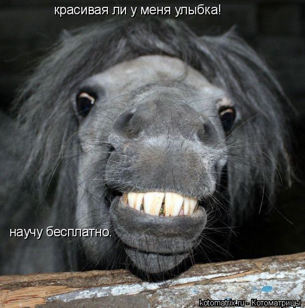 Котоматрица: красивая ли у меня улыбка! научу бесплатно.