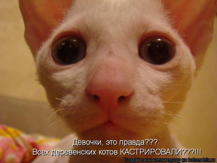 Котоматрица: Всех деревенских котов КАСТРИРОВАЛИ???!!! Девочки, это правда???