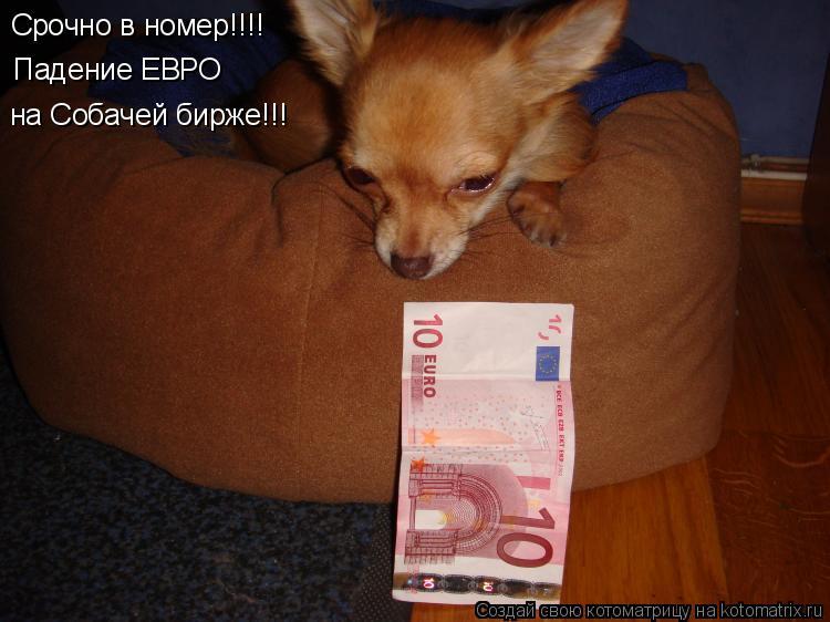 Котоматрица: Срочно в номер!!!! Падение ЕВРО на Собачей бирже!!!
