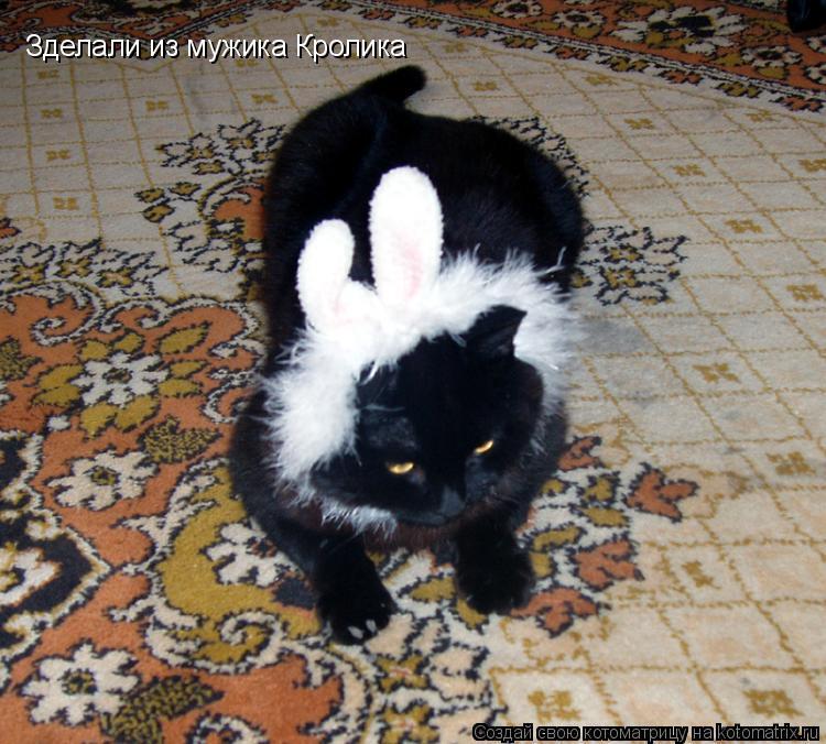 Котоматрица: Зделали из мужика Кролика