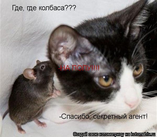 Котоматрица: Где, где колбаса??? -НА ПОЛУ!!!! -Спасибо, секретный агент!