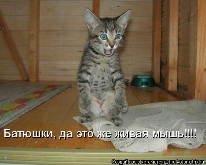 Котоматрица: Батюшки, да это же живая мышь!!!!