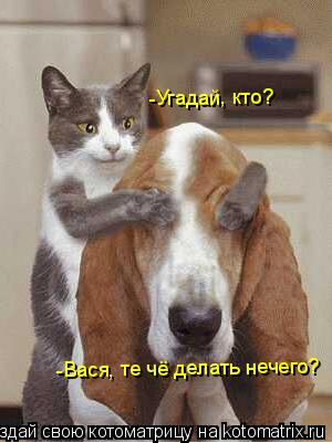 Котоматрица: -Угадай, кто? -Вася, те чё делать нечего?