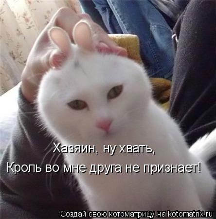 Котоматрица: Хазяин, ну хвать,  Кроль во мне друга не признает!