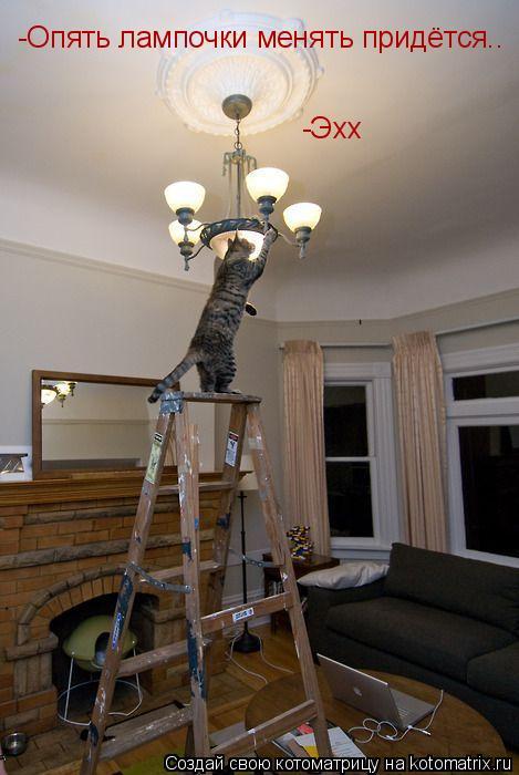 Котоматрица: -Эхх -Опять лампочки менять придётся..