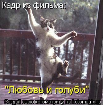 """Котоматрица: Кадр из фильма: """"Любовь и голуби"""""""