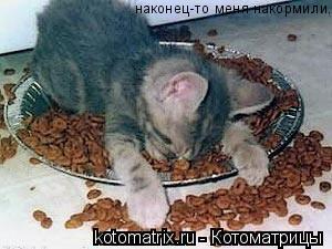 Котоматрица: наконец-то меня накормили.