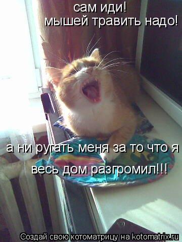 Котоматрица: сам иди! мышей травить надо! а ни ругать меня за то что я весь дом разгромил!!!