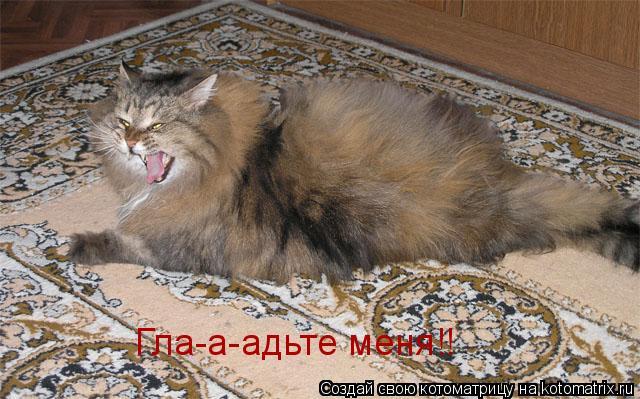 Котоматрица: Гла-а-адьте меня!!